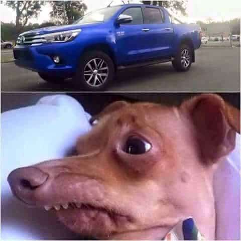 Toyota Hilux Phteven Dog