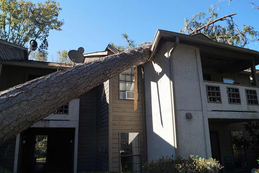 Tree Loppers Insurance